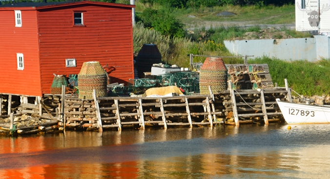 crab-pots-and-lobster-traps-watermark-bilevel-6245