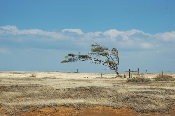 Lone tree south point copy.JPG
