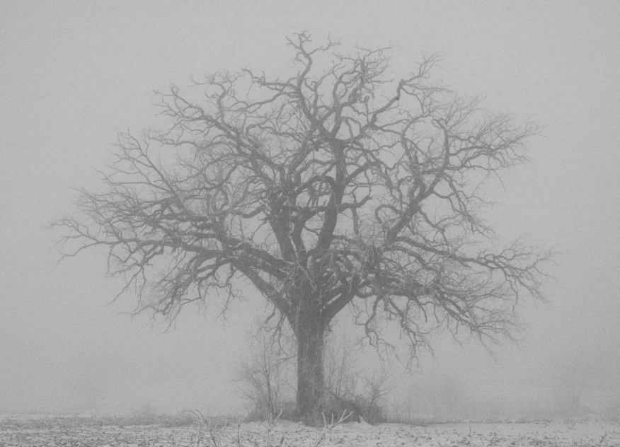 Lonely Fog tree copy.jpg