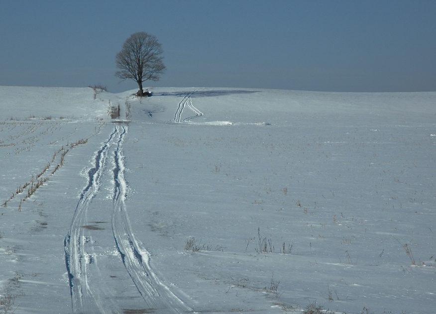 Lonely tree in snow.jpg