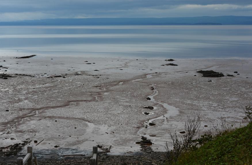 Low Tide Fundy Joggins 9473.jpg