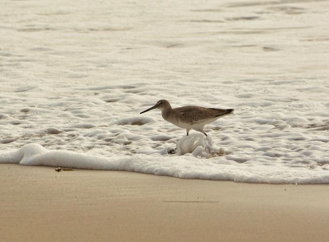 wadingbird  topaz 6775.jpg