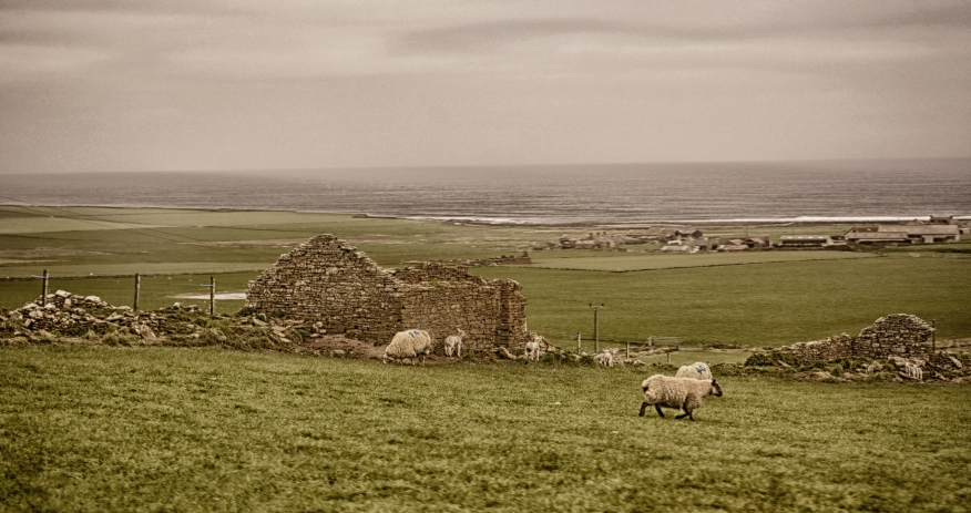 sheep in ruins vintage 1031